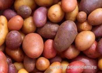 kak-vyrastit-kartofel-1812438