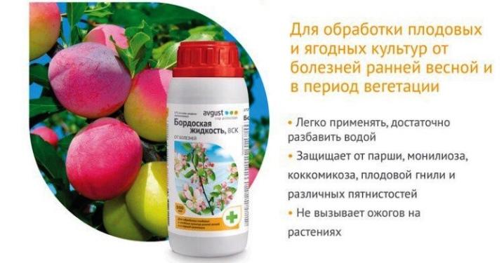 u-lilii-zhelteyut-listya-prichiny-i-lechenie-12.jpg