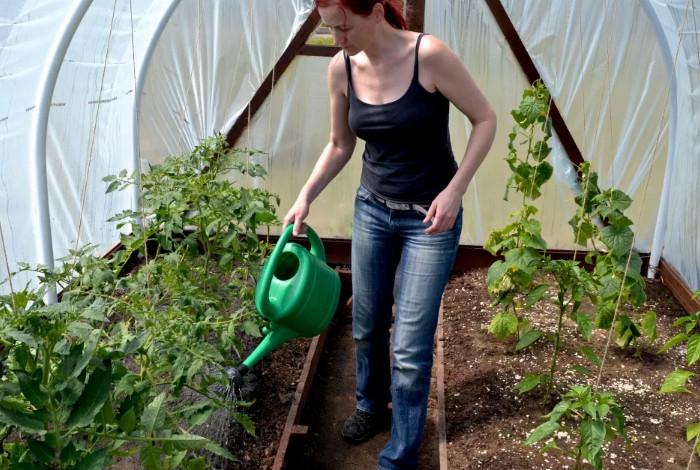 Выясняем как поливать огурцы в теплице