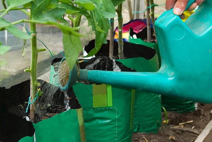Особенности подкормки огурцов в теплице дрожжами