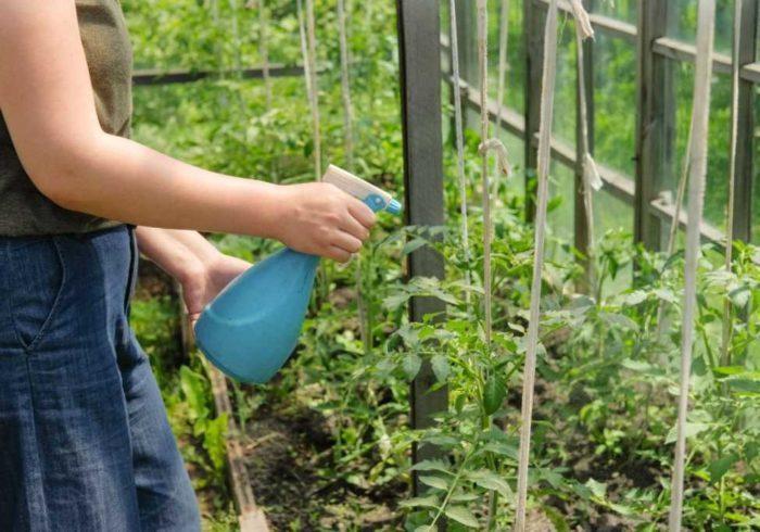 Подкормка и применение борной кислоты для растений, помощь для помидоров, огурцов и перца